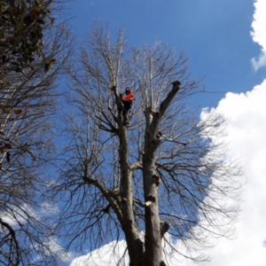 Family run tree surgery on the IOW.
