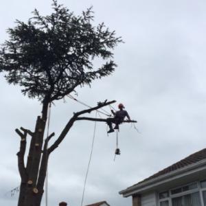 Barlow Tree Surgery