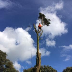 Isle of Wight Tree surgeons