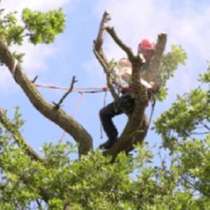 IOW Arborist