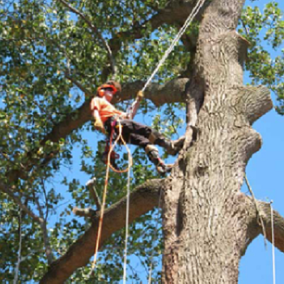 Isle of Wight Arborist